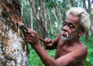 Growers Worried Over Fall In Price Of Natural Rubber The