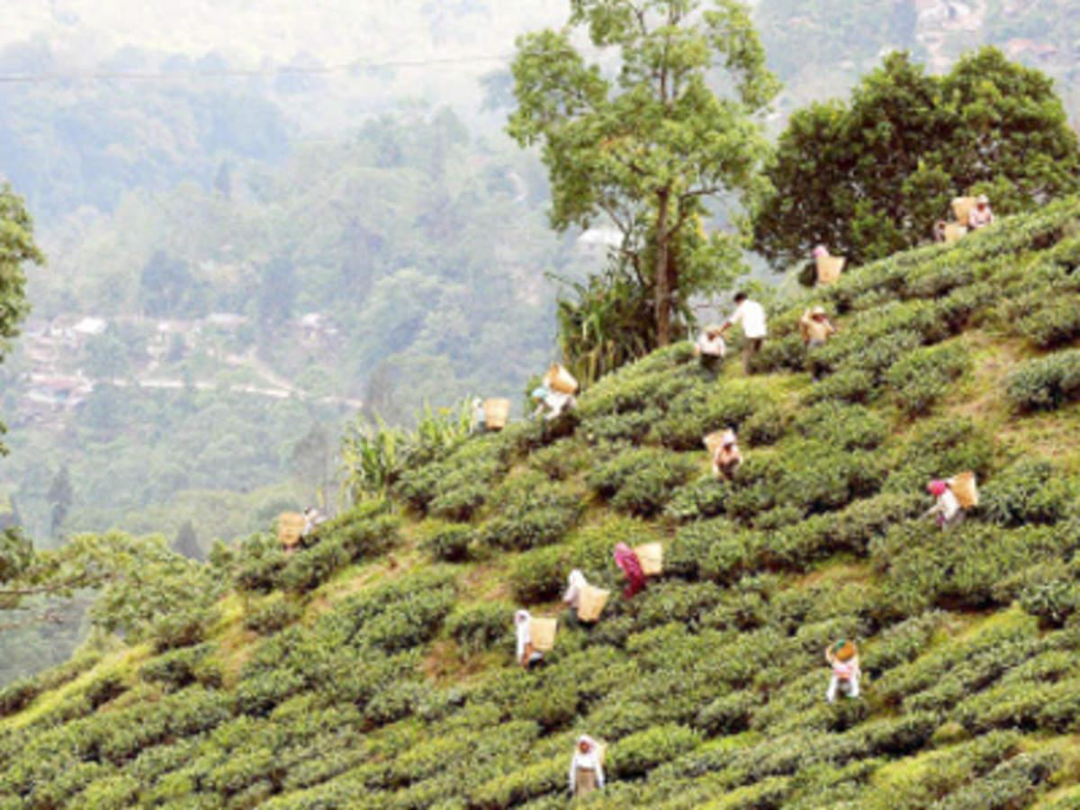 Mohini Tea shipped 13 tonne tea worth Rs 50 lakh to Nigeria