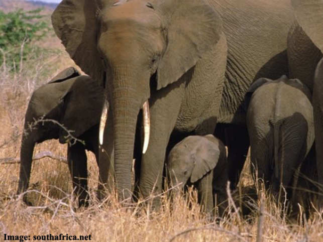 Ebola puts the breaks on African safaris.