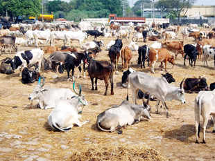 India's cattle population declined 4% to 190.9 million, according to the 19th livestock census in 2012, the most recent.