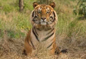 India has 47 tiger reserves covering over 2% of the area and approximately 10% of the recorded forest area.