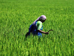 About 95% of farmers fromNayanagarvillage inSamastipurinBihardecided not to plant paddy last year as the India Meteorology Departmenthad forecast a bad monsoon.