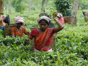 The Tea Board has made it mandatory for retailers to obtain licences for using the name `Darjeeling' before selling the premium variety in West Bengal.