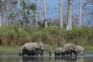 Kaziranga National Park (Thinkstock photos/Getty Images)