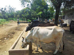 RPI (A), an ally of the BJP-led coalition in the state, is against the blanket ban on beef in Maharashtra and will soon take up the issue with CM Fadnavis.
