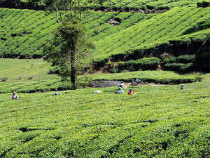 After a long dry spell, tea estates inAssamand West Bengal have received good rains over last week raising hopes among planters for better crop this year.