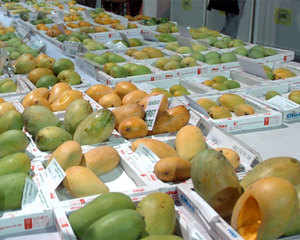 Mango hotspot Malda is expecting exceptionally high level of production this year. But the delight comes riding a major worry for post harvest stage as export option to Bangladesh is practically closed now.
