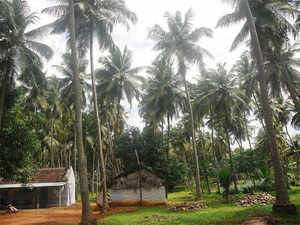 Many of the 25 coconut producers have started production of neera and associated products, ensuring a minimum income of Rs 1,000 per tree a month.