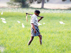 """In an open letter,AIKSsoughtModi'sresponse to 11 questions on """"agrarian crisis""""."""