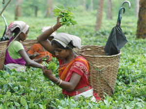 Handpicked as single unopened bud of the tea plant, white tea is considered to be healthier than even the green tea. It's a niche product.