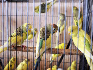 """Birds have the fundamental right to """"live with dignity"""" and fly in the sky without being kept in cages or subjected to cruelty, Delhi High Court has said."""