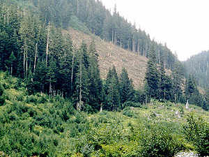 All private land where non forest species such as poplar, eucalyptus and rubber plants are grown will not becategorisedas forest land.