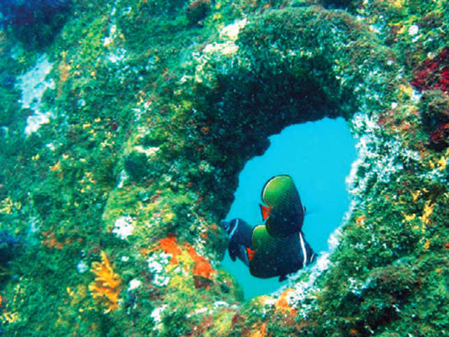 Legends speculate that around 600 shipwrecks dot Goa's seabed, though marine historians say an accurate estimate would be in double digits.