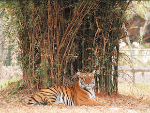 Five amusement parks and four zoos from India are among the best in Asia.