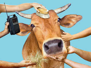The NDA government gears up for its mission — as promised in the BJP election manifesto of 2014 — to protect and promote the cow, but stresses that the reasons are more pragmatic than sacred.