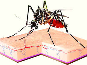 Health Minister Nadda informed LS that 2,56,309 malaria cases have been reported across the country till May this year and 60 people have died due to the disease.