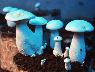 The United States has extended the anti-dumping duty on Indian preserved mushrooms for another five years.