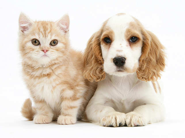 Domestic cats do not generally see their owners as a focus of safety and security in the same way that dogs do, according to new research. (Getty Images)