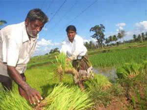 TheAyushministry, which deals withAyurvedaand other Indian systems of medicine, has raised on the possible adverse impact GM crops.
