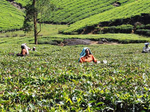 While the price fetched by Makaibari Tea is on the top end, sources said some gardens have been able to garner Rs 7,000 per kg at private sales.