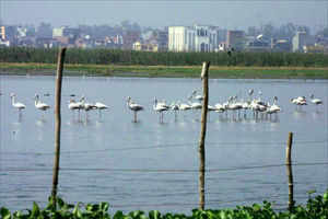 Security measures are being beefed up at the Okhla Bird Sanctuary to prevent loitering by casual visitors. (TOI photo)