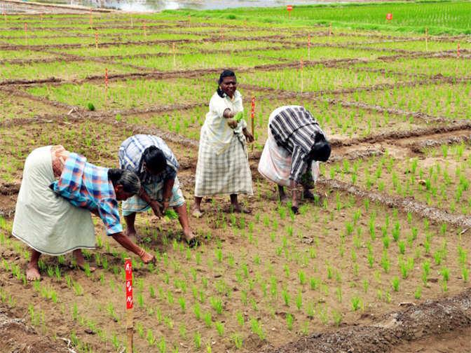Tamilnadu Government Jobs 2019: Latest TN ... - Tamilan Jobs