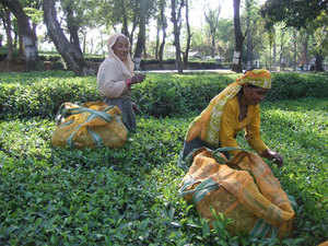 Nearly 70 per cent of the gardens operating in West Bengal were not making profits due to low price realisations, industry body Tea Association of India (TAI) said.
