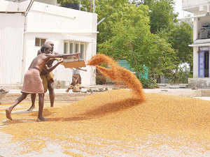 Traders and companies expect prices of pulses to drop significantly in the next few weeks as imported consignments reach Indian ports and ease a shortage.
