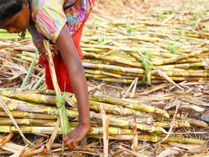 A two-member arbitration panel of Maharashtra Women and Child Welfare Minister Pankaja Munde and the NCP leader Jayant Patil today capped the wages of sugarcane workers at Rs 270 per tonne for a period of five years.