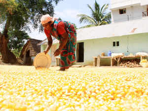 Maize ruled high in the range of Rs 13,000 to Rs 14,730 per tonne last week amid slow arrivals of the crop, according to a report by US Grains Council.