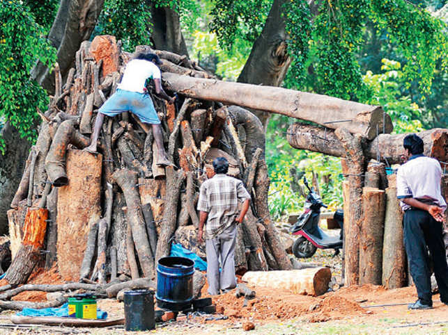 About 30 artists created 19 pieces of art out of fallen trees during a 14-day carving workshop.