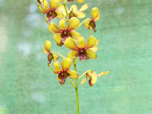 """""""Growing orchids is relatively stress-free compared to other flowering plants and online forums help me interact with orchid growers across the world."""""""
