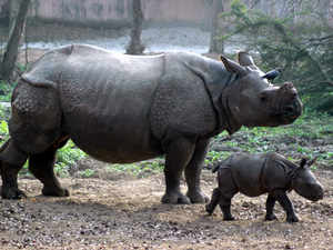 The Kaziranga National Park (KNP) will reopen for tourists tomorrow after its routine closure for the monsoon season. (Representative image)