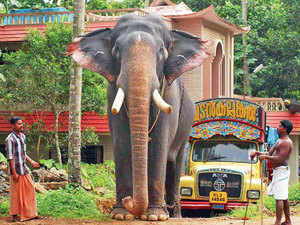 sonepur ban may hit supply of elephants to kerala the economic times