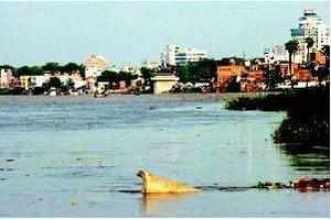 Ganga is the lifeline for about 300-400 million people who reside in its basin which is over 2,500 km in length.