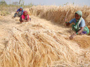 A senior official of Punjab agriculture department told ET that 99% of wheat sowing area is already covered and it is likely to cover 35.05 lakh hectares.