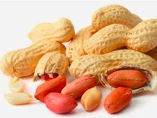 In an assorted Indian diet, groundnuts have an edge over many other foods because of their nutritive value.