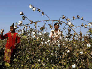 Providing financial assistance in the form of bonus would cost the state exchequer around Rs 300 crore and the move is seen to benefit around one lakh cotton-growing farmers.
