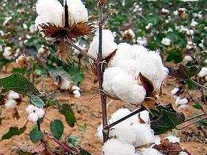 NSAI wants to join as 'Party' in this case as it favours full regulation of cotton seed price, including the trait fees and royalty.