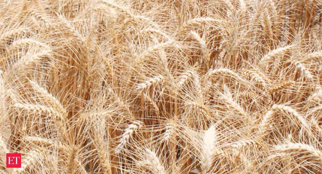 Crop insurance scheme falters as farmers pay high premium ...