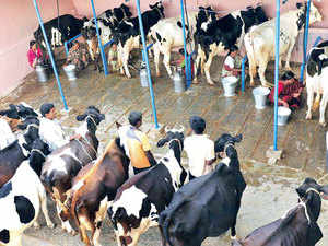 KMF is unable to market or cope with the huge amount of milk it receives daily; KMF diverts it to milk powder and milk products, which result in losses of Rs 5 to Rs 7 per litre.