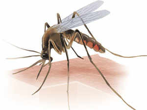 Pharma firm Nutraplus India has started commercial production of anti-malarial drug Lumefantrine at its new plant at Tarapur in Maharashtra.