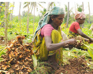 The Spices Board of India will set up an electronic auction platform in next six months in Sikkim for sale of organic large cardamom to help farmers fetch better price.
