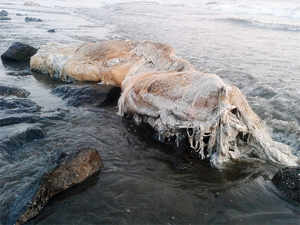 Every year at least 8 million tonnes of plastics leak into the ocean, equivalent to dumping contents of one garbage truck into the ocean every minute.