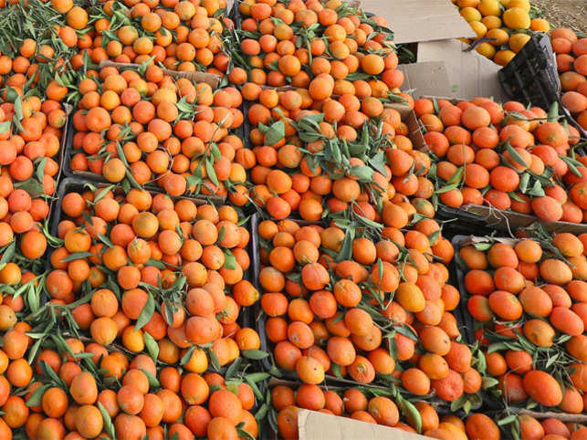 Indeed, as prices of mandarin oranges doubled in Russia due to the ensuing trade sanctions imposed on Turkey, it got some Punjab farmers out of a jam.