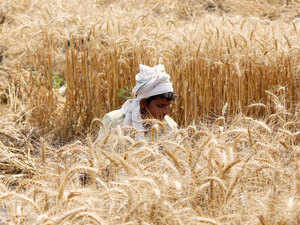 Farmers were today advised to monitor their wheat crop regularly, saying the prevailing conditions were conducive for the spread of fungal disease yellow rust.
