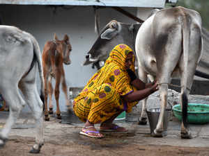 Gujarat-based Surat District Co-operative Milk Producers' Union today announced its ambitious plans for the state of Goa,where it has received licence to provide dairy services to farmers.