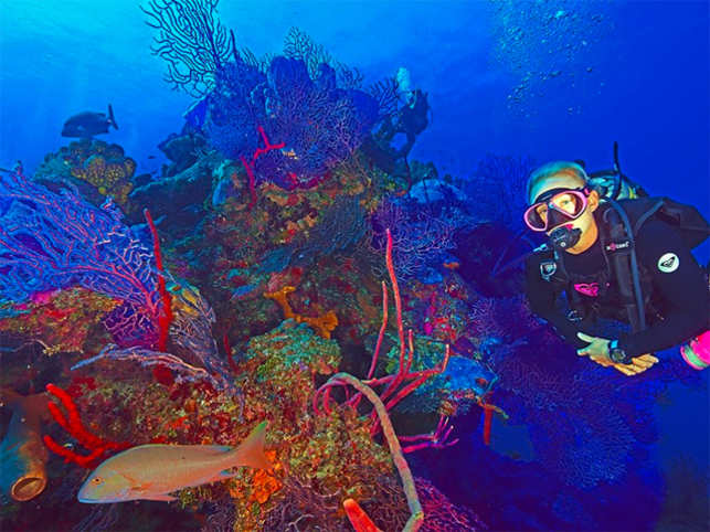 The islands' tax haven status comes second to its status as the place that invented recreational scuba diving.  (Image: Facebook)