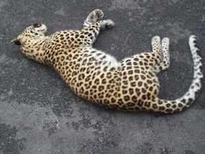 Highway along Gorumara National Park turns into wildlife kill zone
