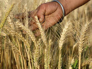 The global wheat glut that's kept prices trapped in a bear market is showing signs of easing after poor weather reduced harvest expectations in India and Australia.